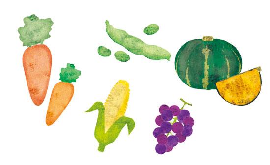 野菜 イラストレーション